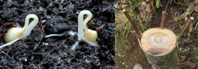 Propagazione: seme, talea e innesto
