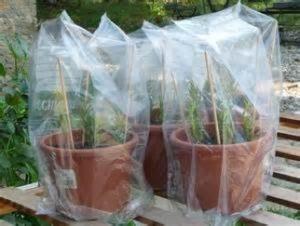Operazione di copertura dei vasi con sacchetti di plastica
